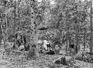 The tangled heavy woods on Culps' Hill at Gettysburg. The dark spots on the trees are where they were struck by musket balls fired by the upslope Union troops. Photo: US Library of Congress